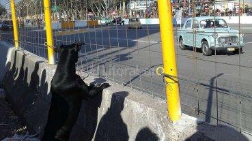 """Un perro """"tuerca"""" en el callejero"""