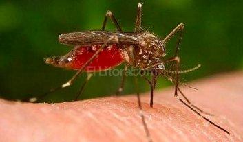 Proponen un operativo de prevenci�n del Dengue, Chikungunya y Zika en la ciudad
