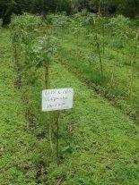 Buscan reforestar los campos