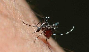 """Estiman que """"el pico"""" de casos de dengue llegará en Semana Santa"""