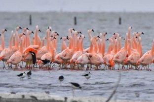 Córdoba: la reserva natural de Ansenuza se convirtió en Parque Nacional  La mayor reserva natural del país
