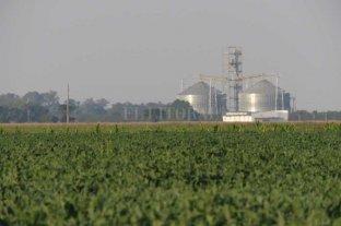El precio de la soja superó los 600 dólares, el valor más alto desde 2012 En Chicago