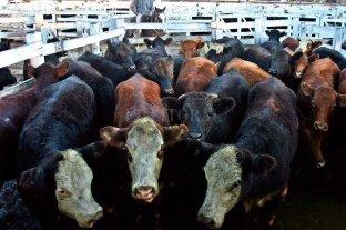El campo va al paro por el cierre de exportaciones de carne Se reunió la Mesa de Enlace
