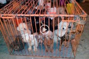 Desbaratan un criadero de perros en Santa Fe: secuestraron unos 80 animales Barrio Yapeyú