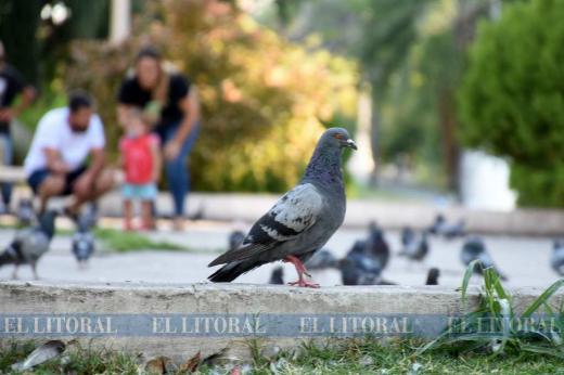 El palomar, que sigue convocando a chicos y grandes, necesita mantenimiento