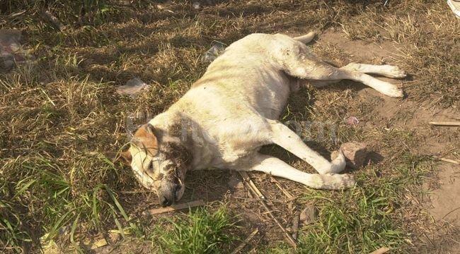 La matanza no sólo involucró a gran cantidad de canes sino que también alcanzó a gatos y distintas clases de aves que también fueron encontradas sin vida.  <strong>Foto:</strong> El Litoral