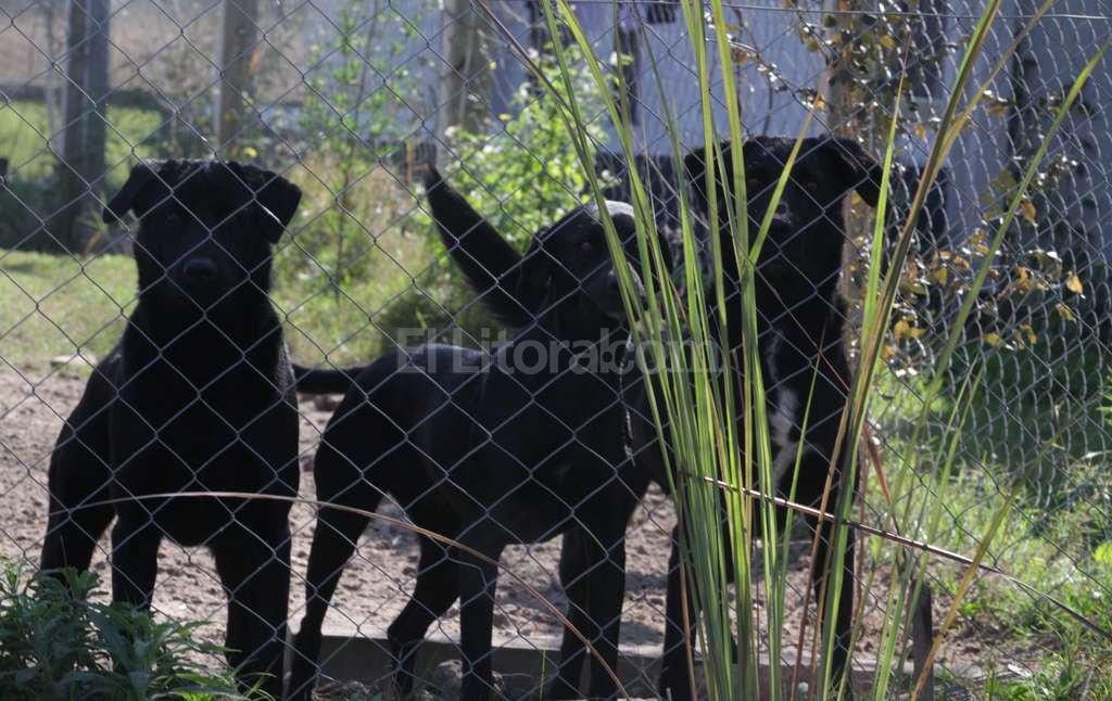 Importante. Las familias que tengan perros potencialmente peligrosos deberán cercar los predios con paredes o alambrado olímpico. Crédito: Mauricio Garín