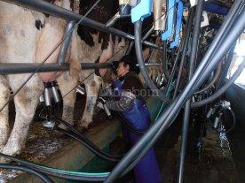 Naci�n convoc� a provincias para evaluar la crisis de la lecher�a