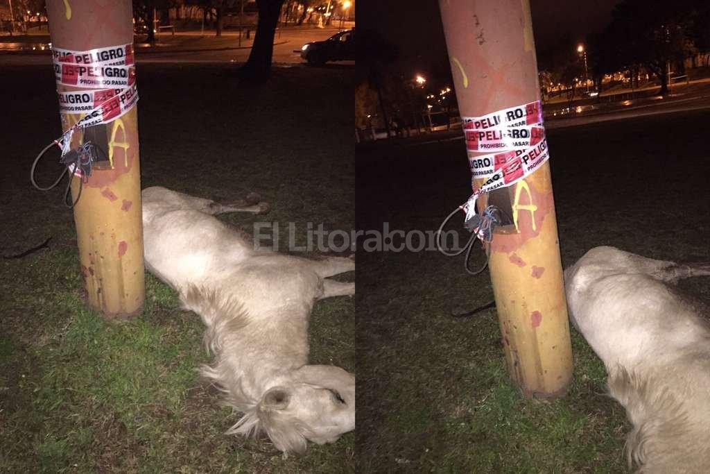 <strong>Foto:</strong> Periodismo Ciudadano