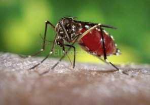 Dengue: en la provincia se trataron 5 casos