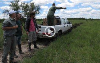 """Cómo fue la liberación del aguará guazú en """"El Fisco"""""""