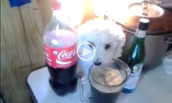 Video: el guardi�n del fernet