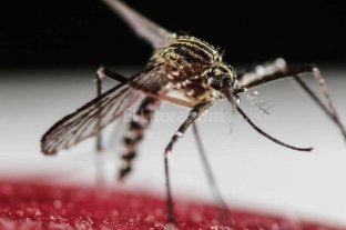 Confirman el primer caso de dengue aut�ctono en Santa Fe