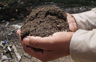 Proyectan aumentar la producci�n de compost en el Mercado Abastecedor