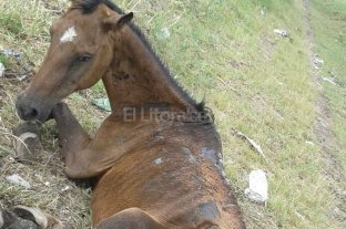 Muri� otro caballo en p�simas condiciones