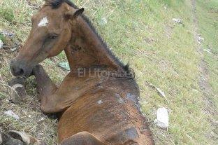 Murió otro caballo en pésimas condiciones -
