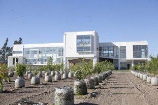 Cient�ficos chilenos buscan crear s�perarboles resistentes al cambio clim�tico