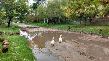 Las calles de Colastin� Norte se convierten en lagos para patos