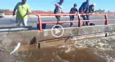 Video: pescan s�balos a la vera de la autopista a Rosario
