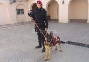 Perros y caballos, aliados de la polic�a en las calles