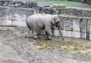 Siguen apareciendo animales muertos en el zoo de Mendoza