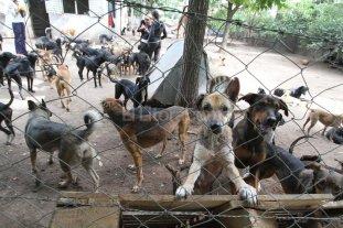 Amenazan con matar a los perros del refugio