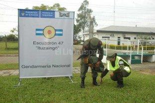 Cig�e�a herida fue rescatada por Gendarmer�a Nacional