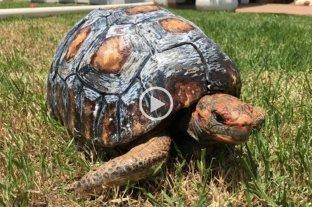 Video: salvaron una tortuga con una impresora 3D