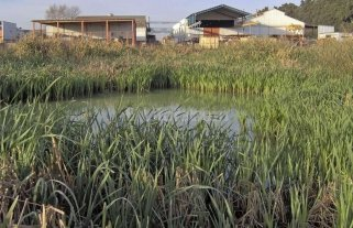 Humedales para mejorar la calidad del agua
