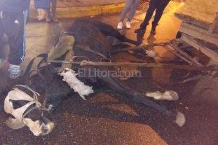 Se recupera el caballo accidentado en Bulevar