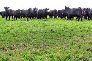 Promesas de la ganadería  -