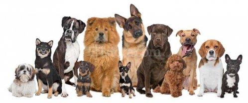 Tecnolog�a para mascotas: una aplicaci�n para la alimentaci�n y GPS para localizarlas
