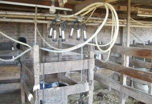 Tamberos evalúan tomar medidas ante la falta de recomposición del precio de la leche -