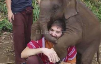 Para morir de amor: elefantes que se comportan como perros