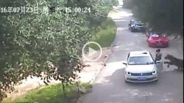 Video: tigre atac� y mat� a una turista en un parque