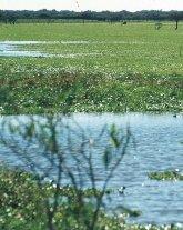 El gobierno realizar� un Inventario Nacional de Humedales