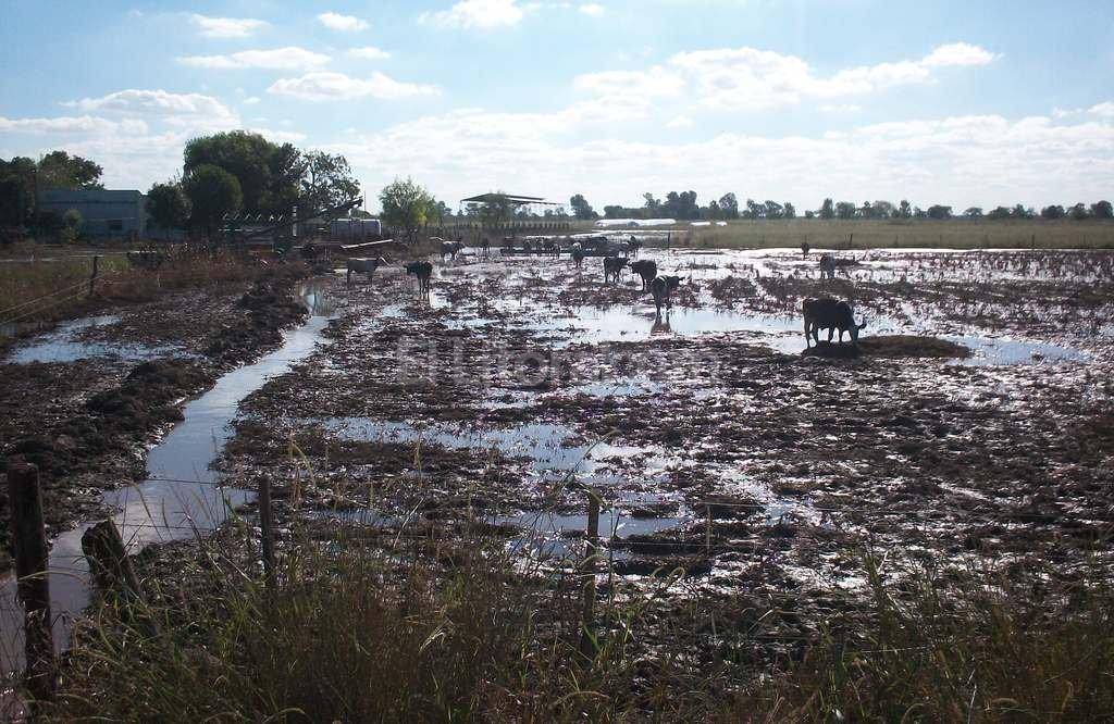 Aun persisten en las zonas tamberas las consecuencias de las inundaciones de abril. Foto:El Litoral