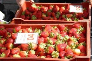Lleg� la ayuda econ�mica a los productores frutilleros