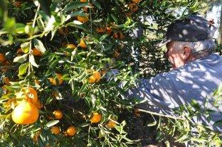 Exportadores de citrus tambi�n analizan regalar frutas como protesta