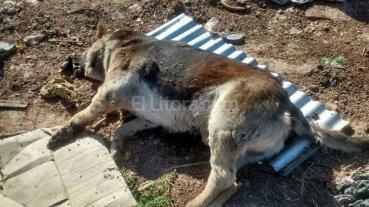Preocupaci�n por matanza de animales