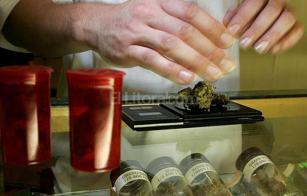 Milenaria. La planta de cannabis se utiliz� por miles de a�os en diversas culturas para distintos fines, entre ellos, la medicina. Foto:Archivo El Litoral