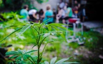 Tres pacientes de Iapos ya son tratados con aceite de cannabis