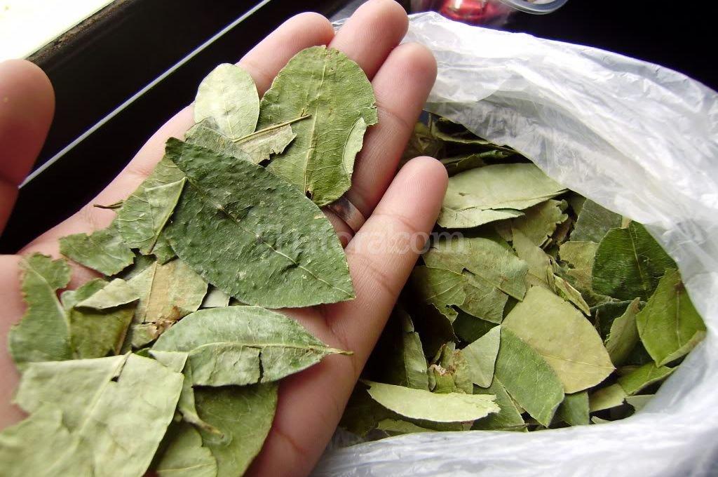 Masticar hojas de coca es una pr�ctica ancestral en el norte argentino Foto:diarioinfo.com