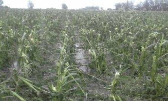 Evaluaron la situación de los productores afectados por el granizo