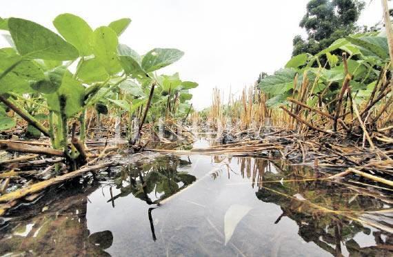 ¿La agricultura está matando al campo?