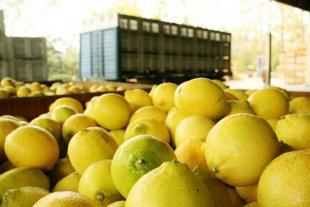 Estados Unidos suspendió la importación de limones argentinos