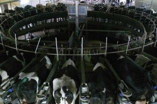 La caída de la producción láctea fue la peor en 46 años
