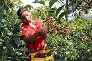 Brasil frena la importación de café