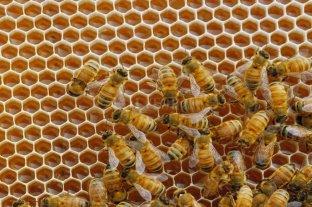 Murió picado por abejas