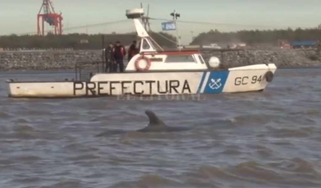 ¡Pobrecita! Una ballena quedó encallada en el Río de la Plata